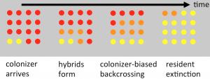 colonizer_hybridization